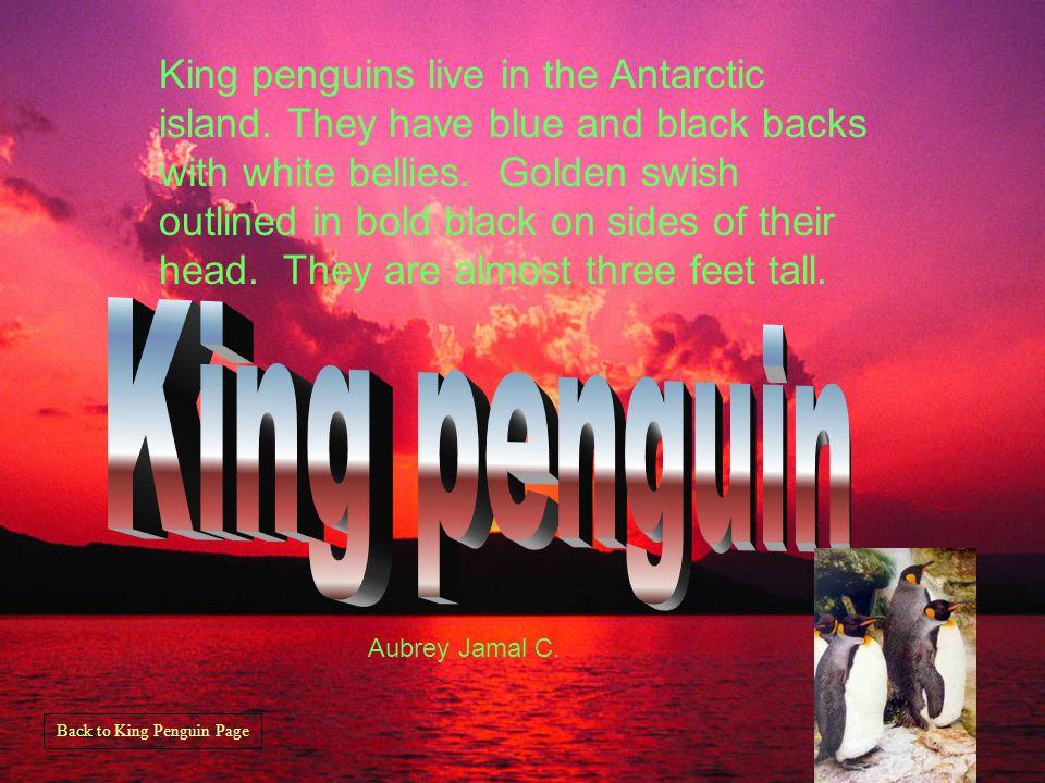 Rockhopper Penguin lives in New Zealand. The penguin has red eyes.