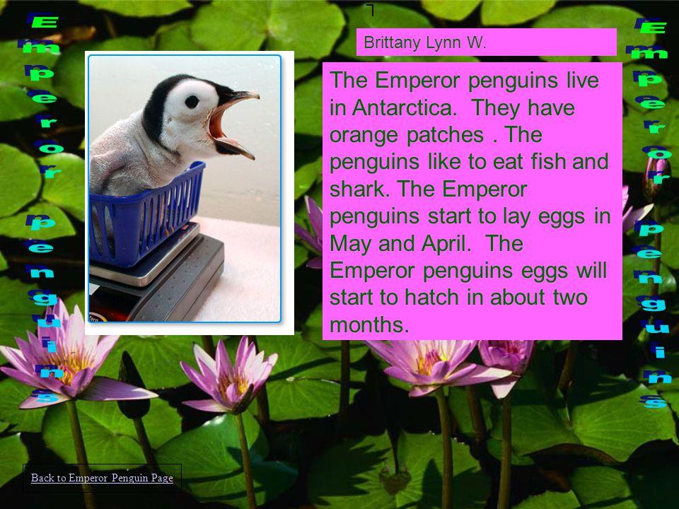 Aubrey Jamal C. King penguins live in the Antarctic island.