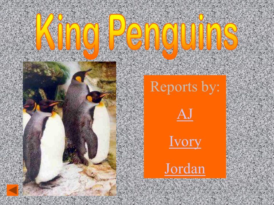 Reports by: AJ Ivory Jordan