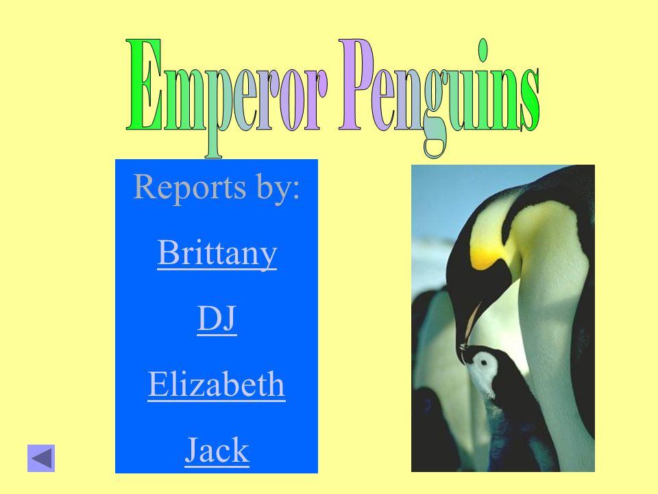 Reports by: Brittany DJ Elizabeth Jack