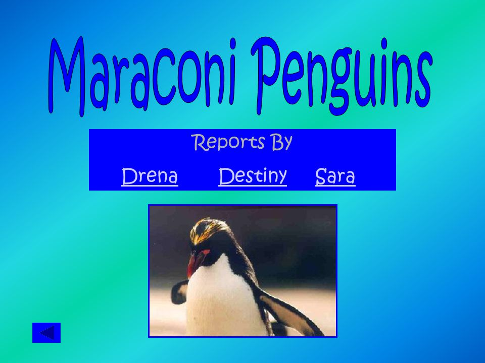 Reports By DrenaDestinySara