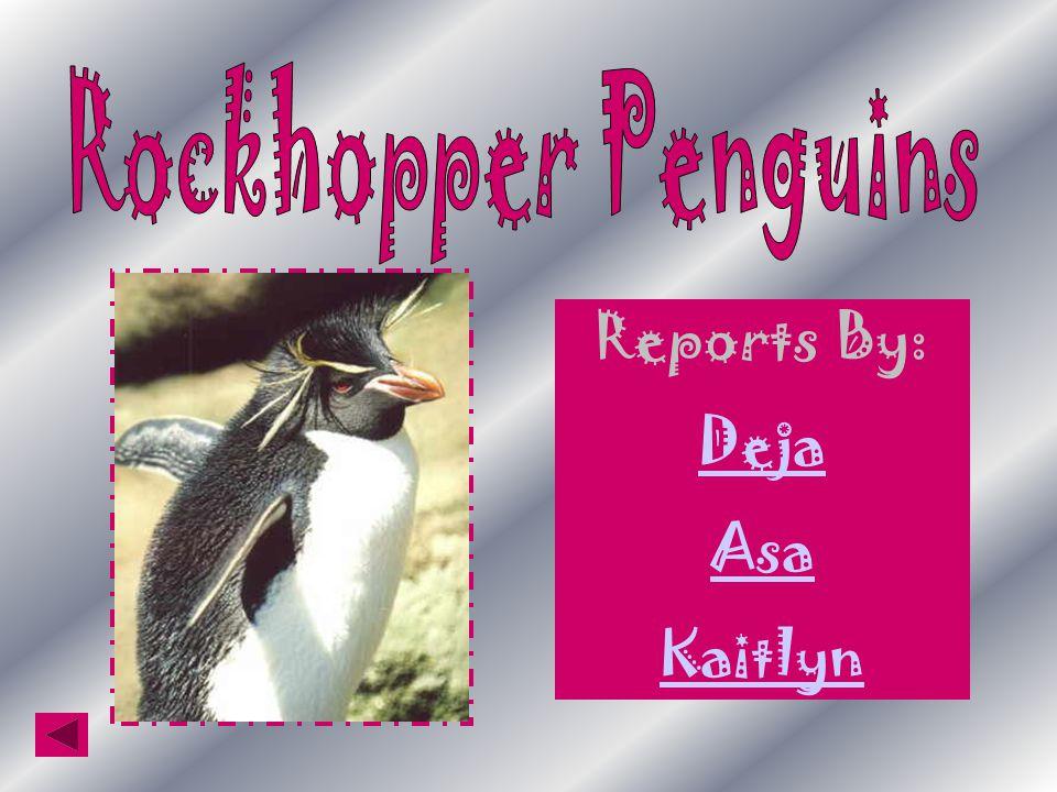 Reports By: Deja Asa Kaitlyn