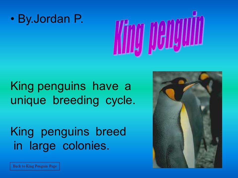 By.Jordan P.King penguins have a unique breeding cycle.