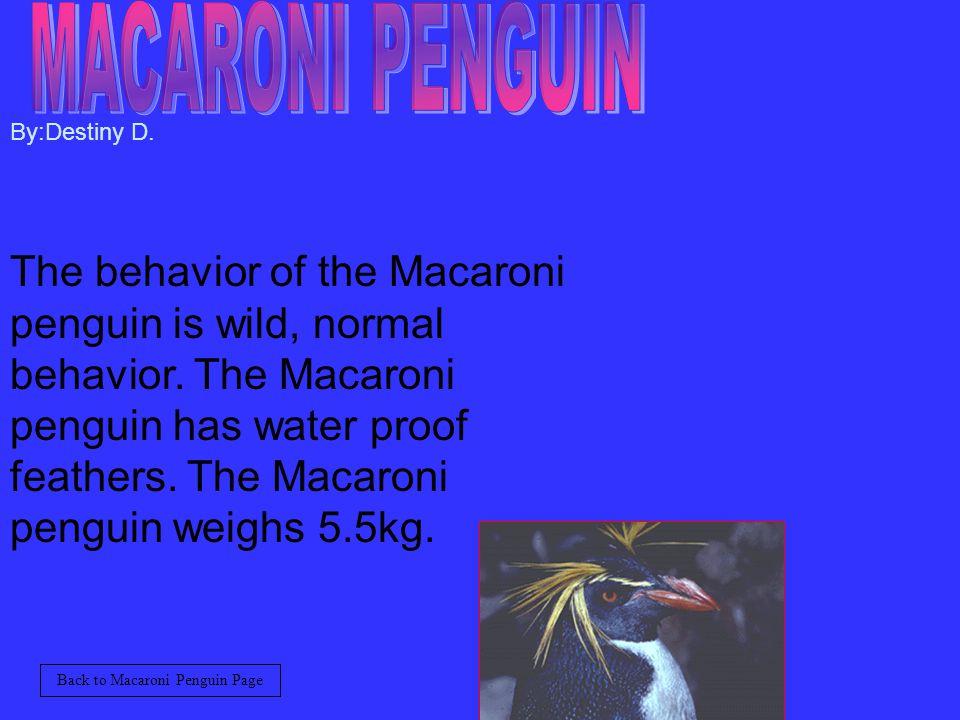 By:Destiny D.The behavior of the Macaroni penguin is wild, normal behavior.