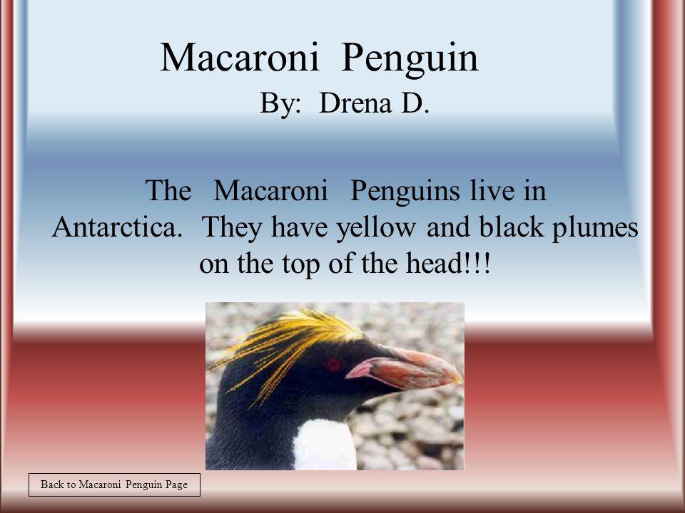 By:Destiny D. The behavior of the Macaroni penguin is wild, normal behavior.