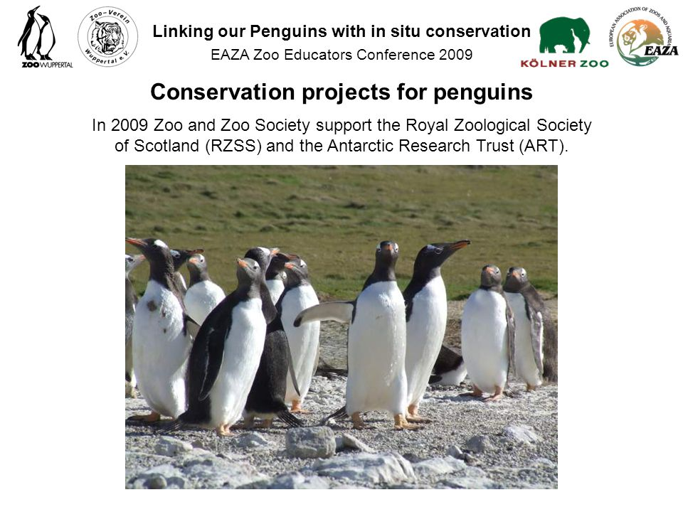 In 2009 Zoo and Zoo Society support the Royal Zoological Society of Scotland (RZSS) and the Antarctic Research Trust (ART).