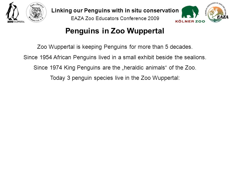 Zoo Wuppertal is keeping Penguins for more than 5 decades.