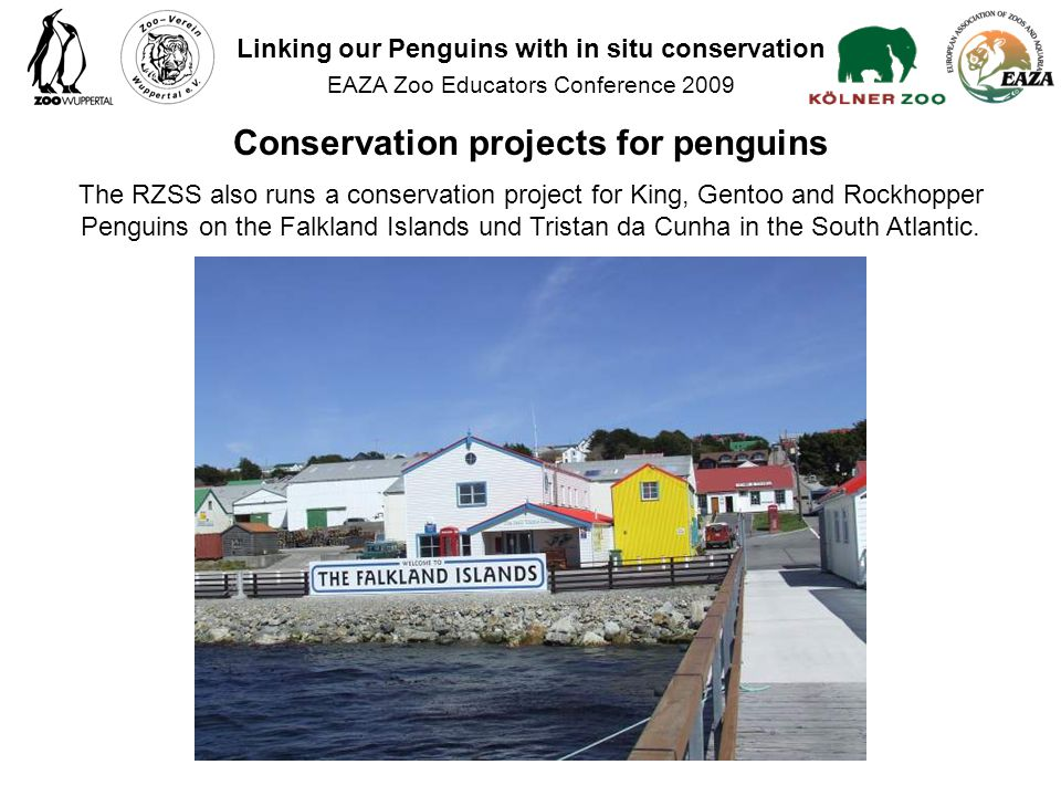 The RZSS also runs a conservation project for King, Gentoo and Rockhopper Penguins on the Falkland Islands und Tristan da Cunha in the South Atlantic.