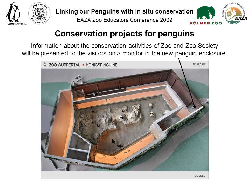 Information about the conservation activities of Zoo and Zoo Society will be presented to the visitors on a monitor in the new penguin enclosure.
