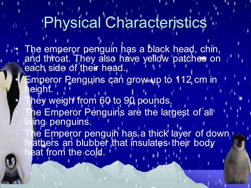 Classification Kingdom: Animalia Phylum: Chordata Class: Aves Order: Sphenisciformes Family: Spheniscidae Genus: Aptenodytes Species: Aptenodytes fors