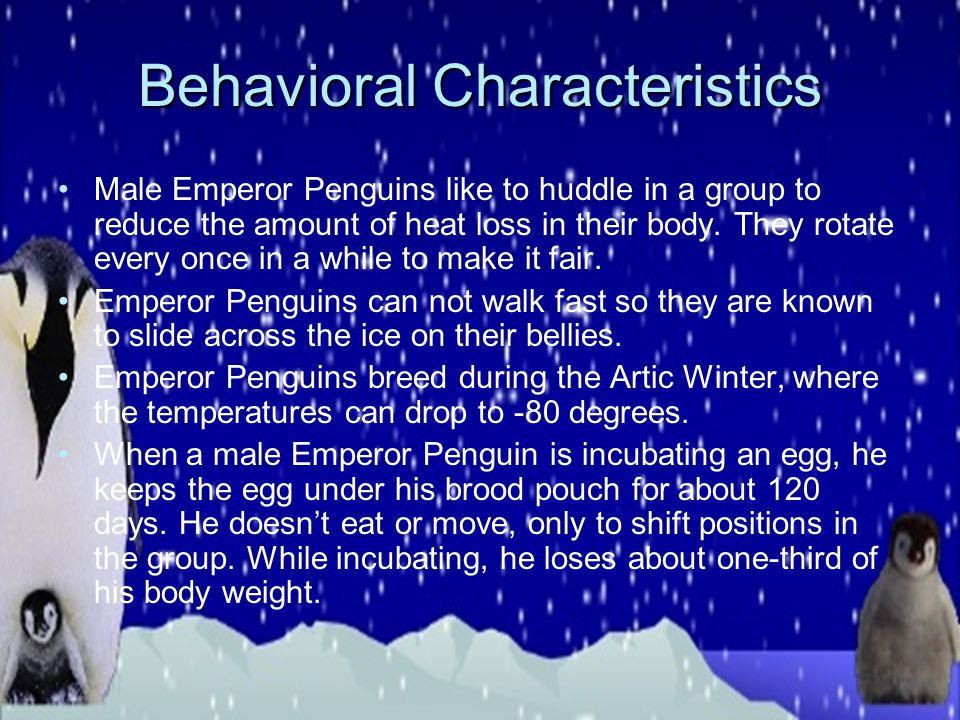 Physical Characteristics The emperor penguin has a black head, chin, and throat. They also have yellow patches on each side of their head. Emperor Pen