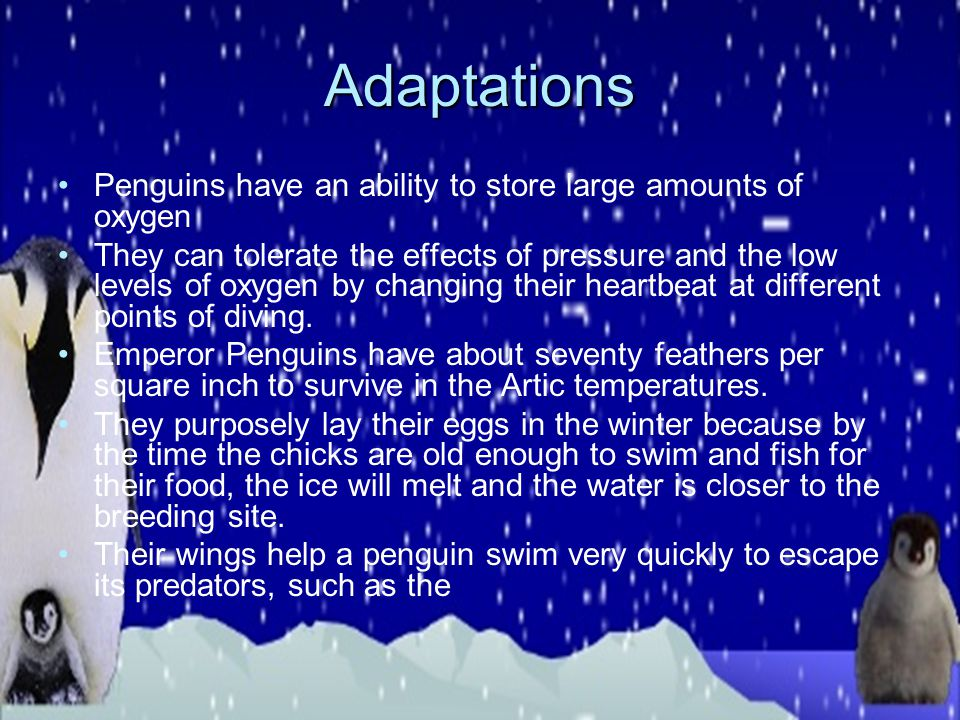 Habitat Emperor penguins live in the Southern Hemisphere and only in Antarctica. They live on islands that are away from predators because they have t
