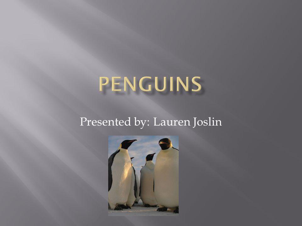Presented by: Lauren Joslin