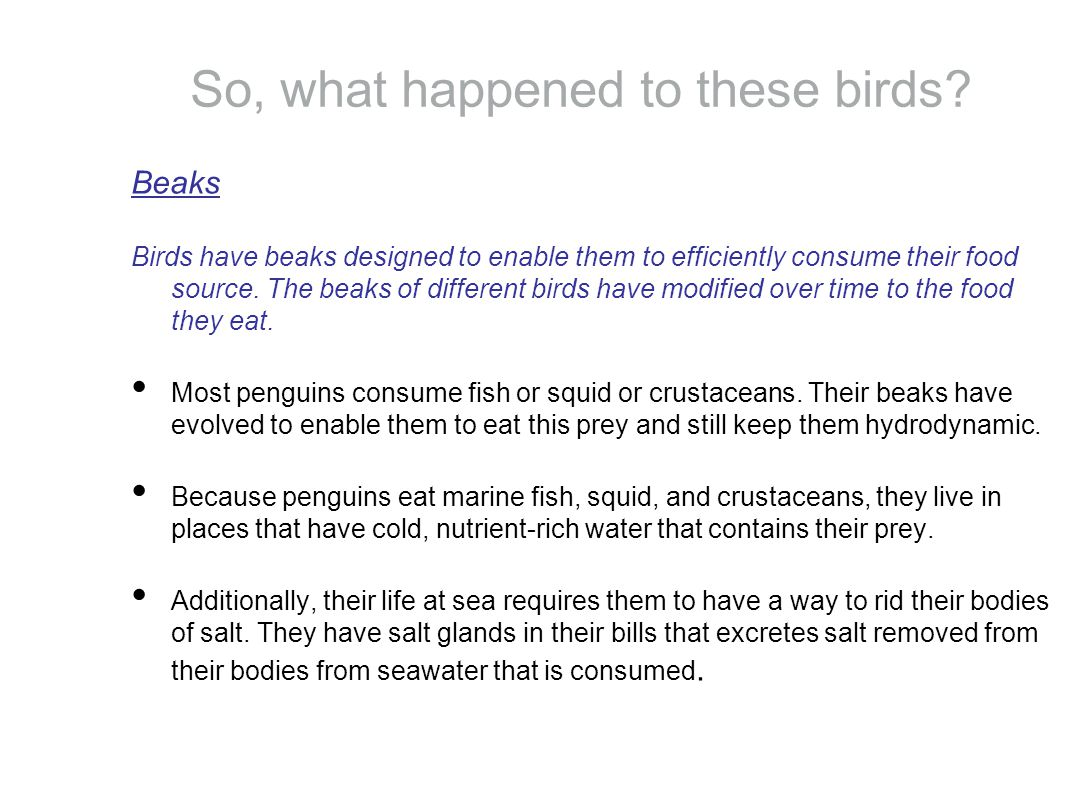 So, what happened to these birds.