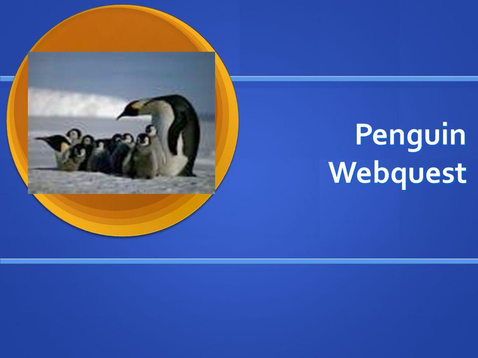 Penguin Webquest