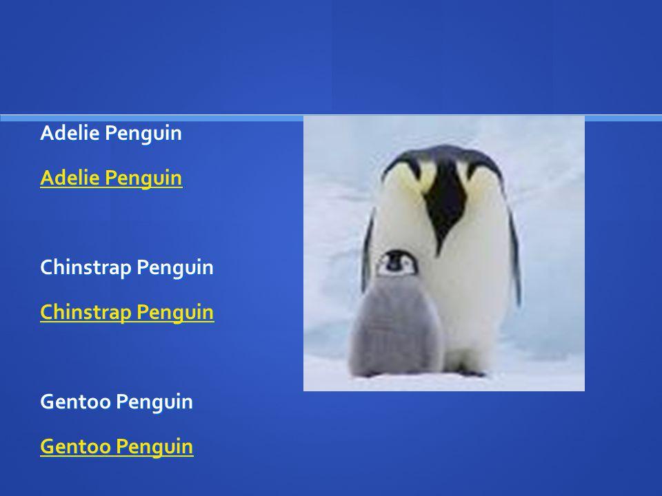 Adelie Penguin Adelie Penguin Adelie Penguin Chinstrap Penguin Chinstrap Penguin Chinstrap Penguin Gentoo Penguin Gentoo Penguin Gentoo Penguin