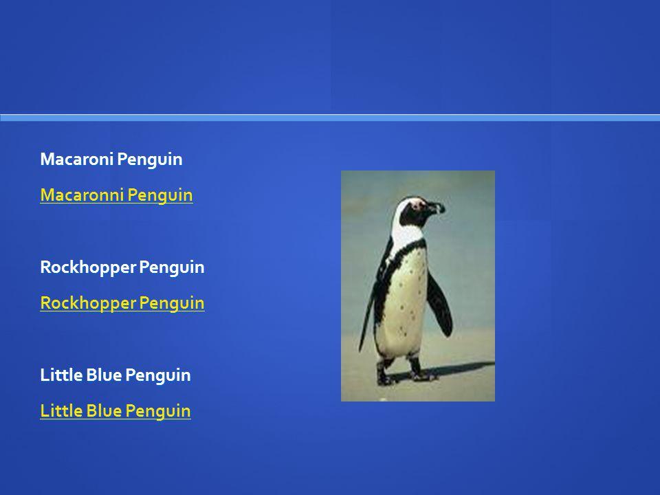 Macaroni Penguin Macaronni Penguin Macaronni Penguin Rockhopper Penguin Rockhopper Penguin Rockhopper Penguin Little Blue Penguin Little Blue Penguin Little Blue Penguin
