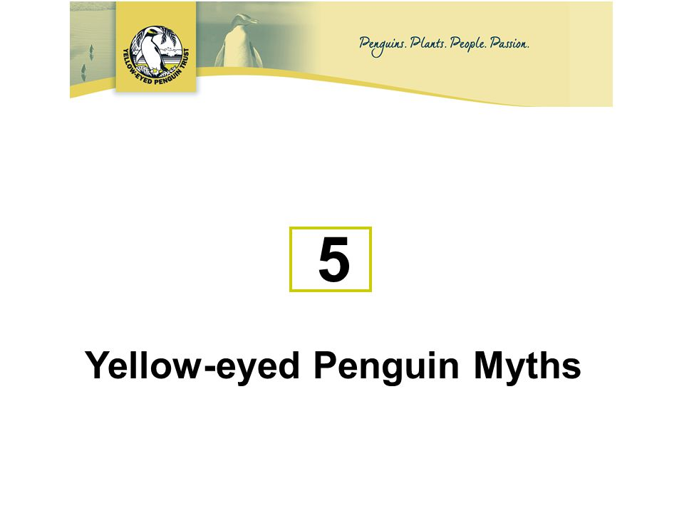 5 Yellow-eyed Penguin Myths