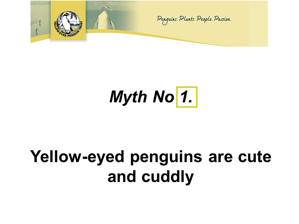 Myth No 1. Yellow-eyed penguins are cute and cuddly