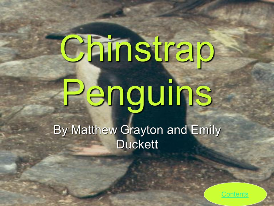 Chinstrap Penguins By Matthew Grayton and Emily Duckett Contents