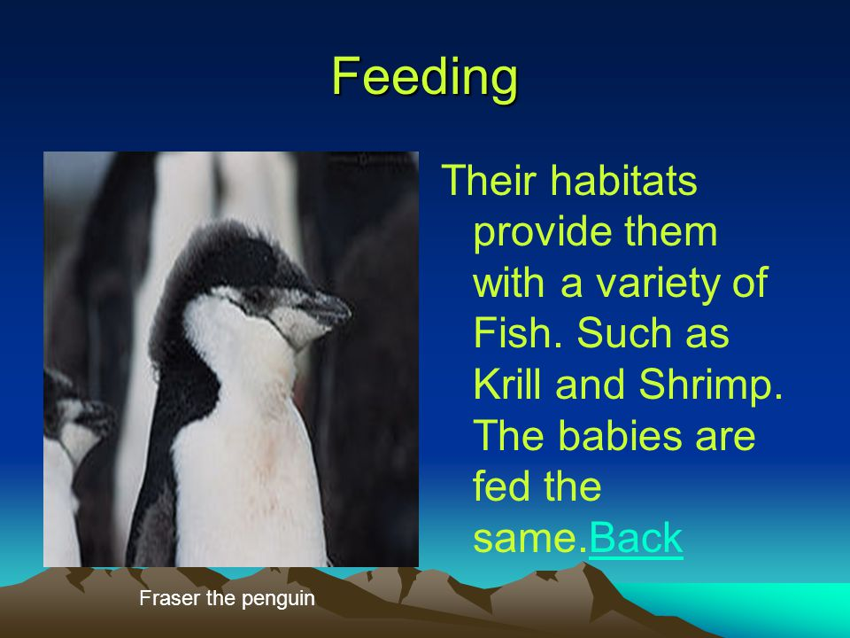 Feeding Their habitats provide them with a variety of Fish.