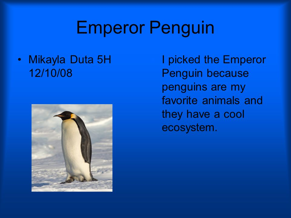 Where They are Located Emperor penguins are located in Antarctica in the Arctic.