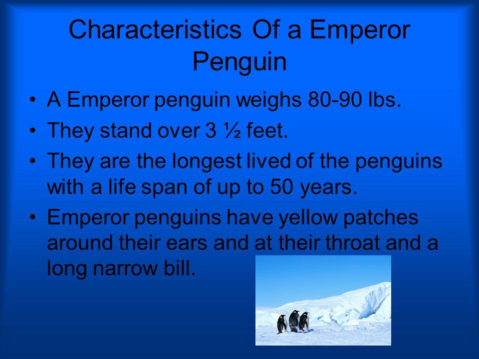 Characteristics Of a Emperor Penguin A Emperor penguin weighs 80-90 lbs.