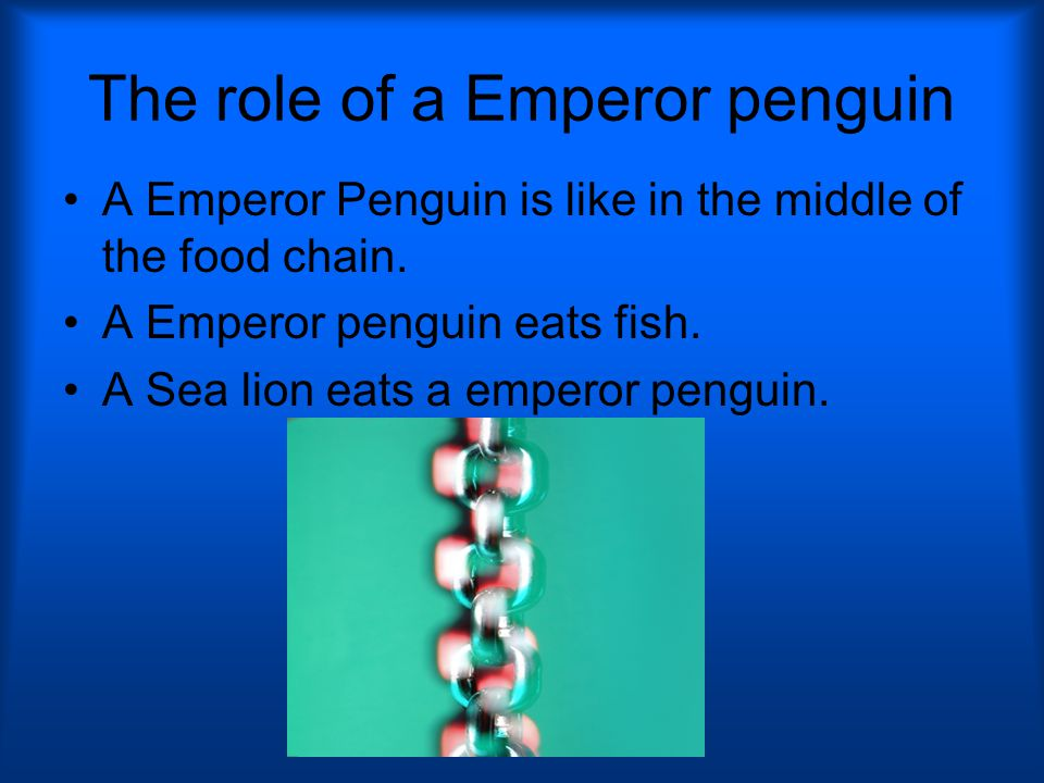 The role of a Emperor penguin A Emperor Penguin is like in the middle of the food chain.