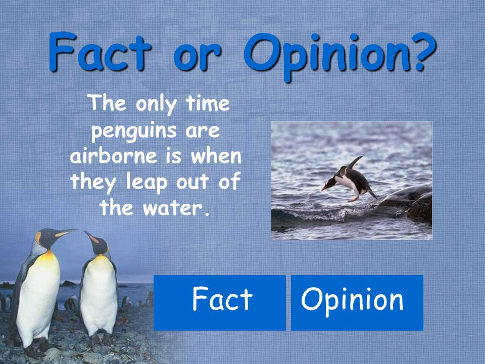 The only time penguins are airborne is when they leap out of the water. FactOpinion Fact or Opinion?