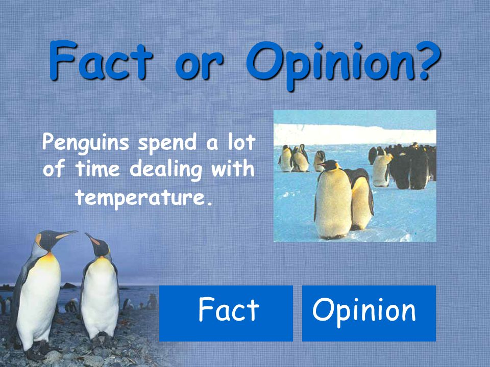 FactOpinion Fact or Opinion Penguins spend a lot of time dealing with temperature.