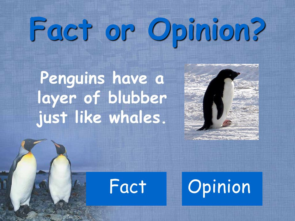 FactOpinion Fact or Opinion? Penguins have a layer of blubber just like whales.