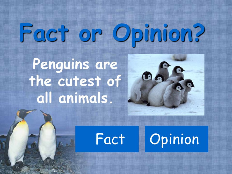 Penguins are the cutest of all animals. Fact Fact or Opinion? Opinion