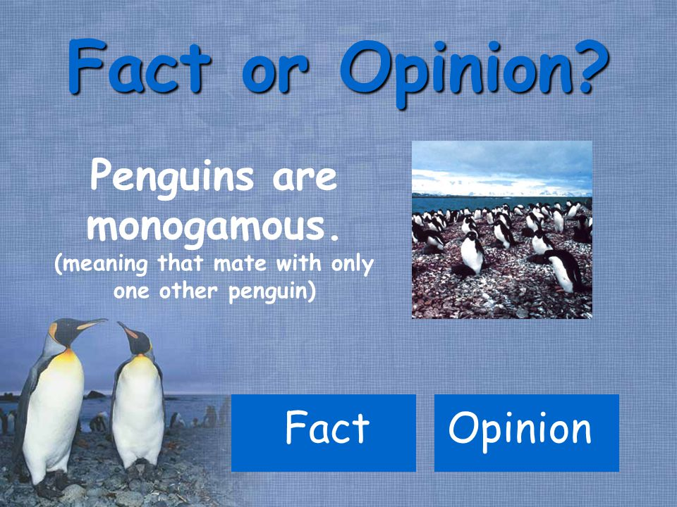 FactOpinion Fact or Opinion. Penguins are monogamous.
