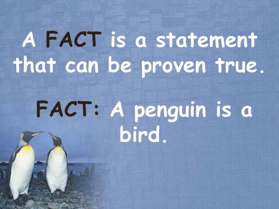 A FACT is a statement that can be proven true. FACT: A penguin is a bird.