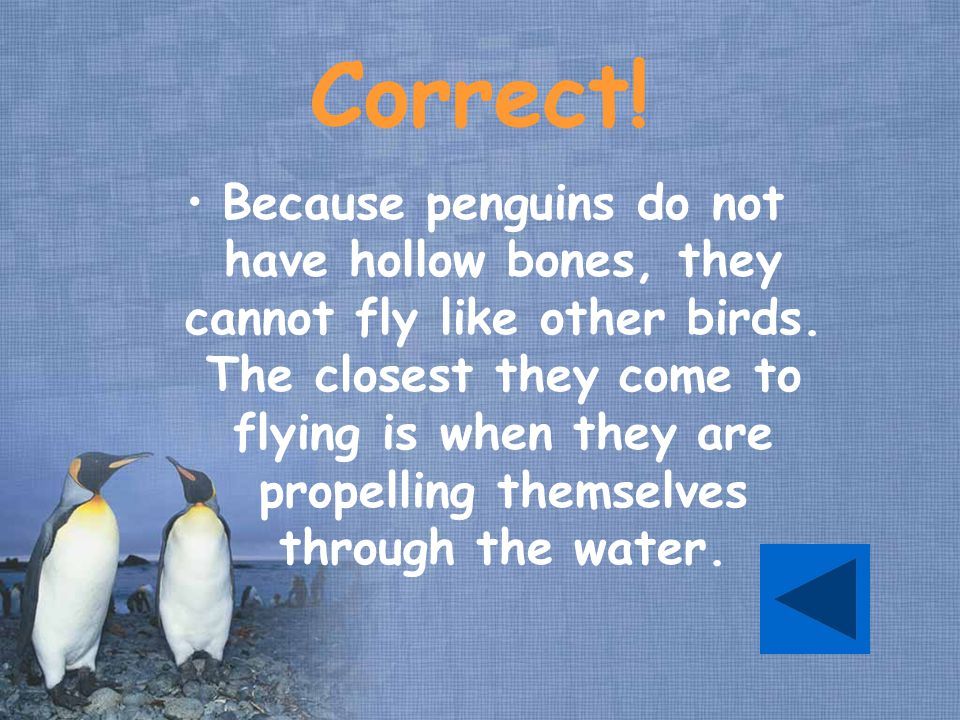 Correct. Because penguins do not have hollow bones, they cannot fly like other birds.