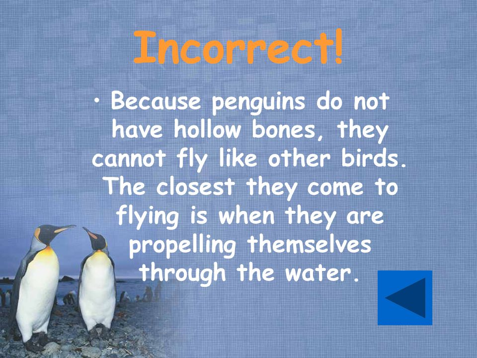 Incorrect.Because penguins do not have hollow bones, they cannot fly like other birds.