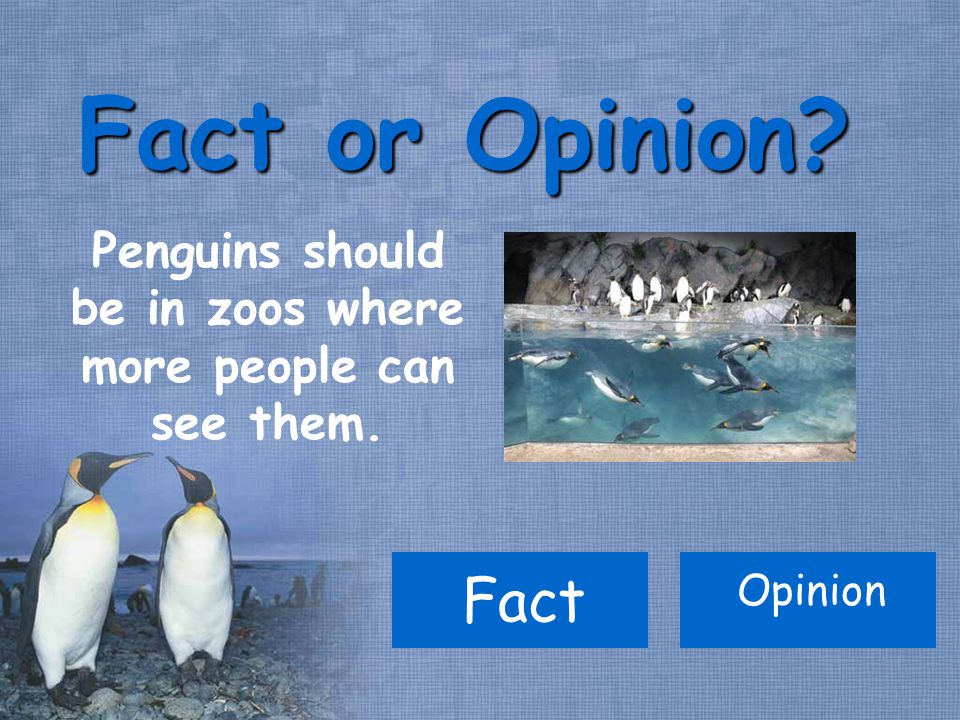 Penguins should be in zoos where more people can see them. Fact or Opinion Fact Opinion