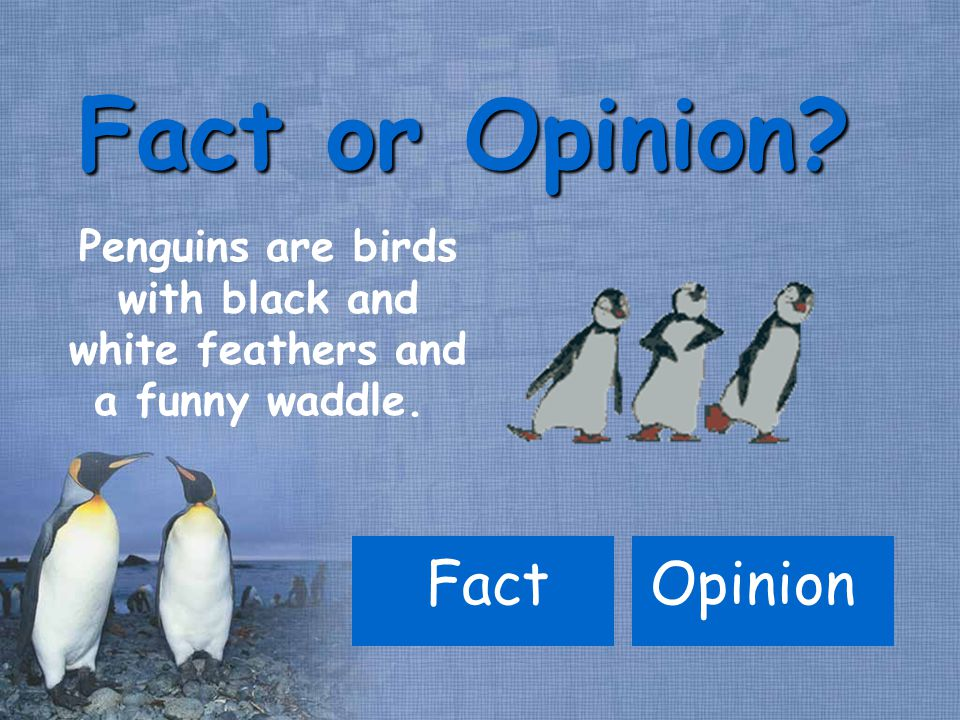 Penguins are birds with black and white feathers and a funny waddle. Fact or Opinion OpinionFact