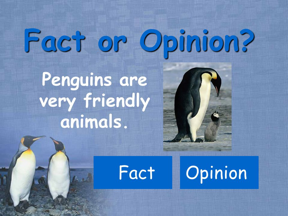 Penguins are very friendly animals. Fact Fact or Opinion Opinion