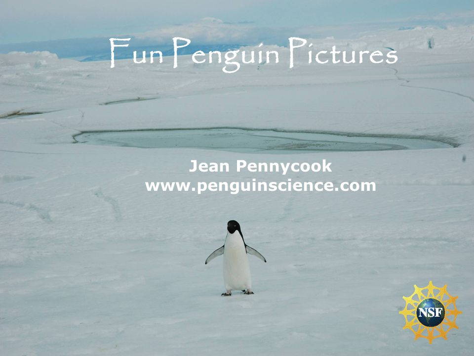 These slides are pictures of penguins being penguins and each one has it's own story.