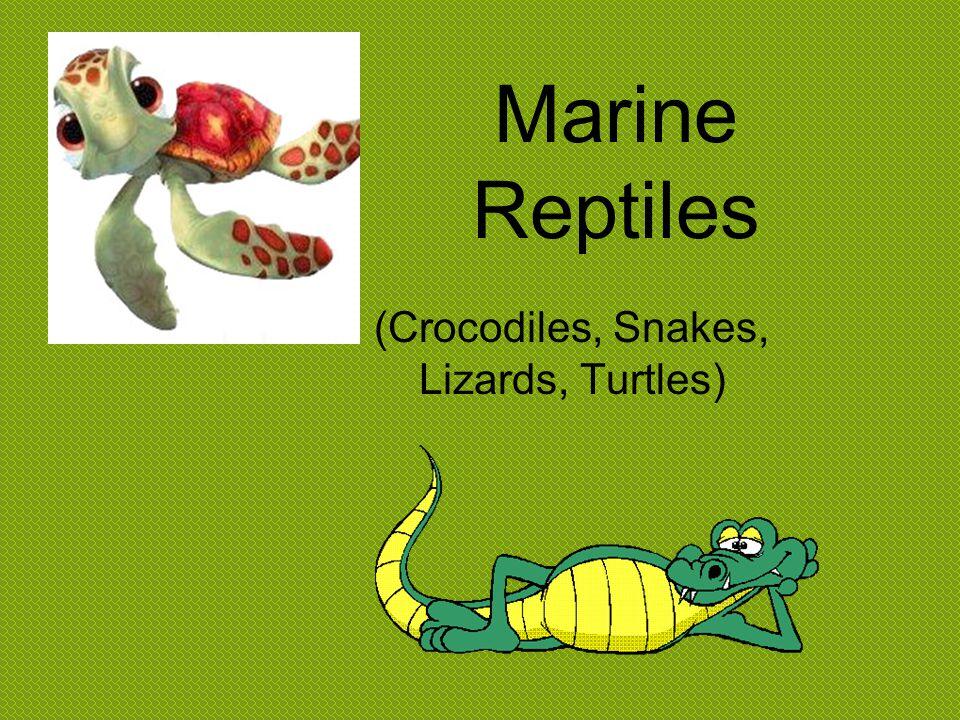Class- Reptilia 1.Marine Iguana 2.Sea Snakes 3.Sea Turtles 4.Saltwater Crocodile