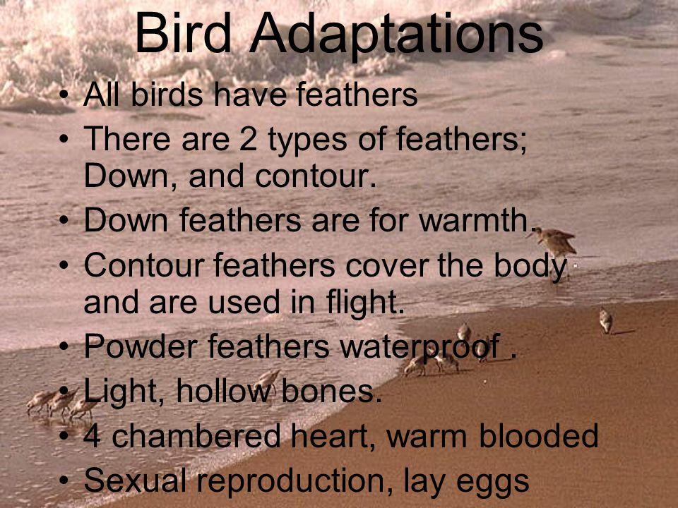 Marine Bird Adaptations True seabirds have salt secreting glands.