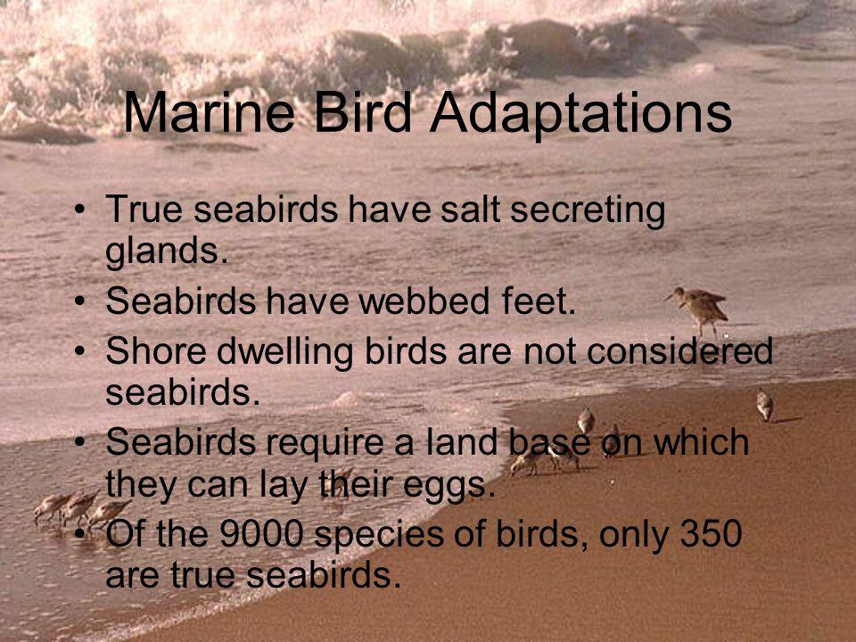 Sea Birds- Video