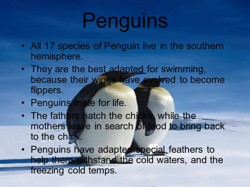 Did you Know .Penguins are birds.