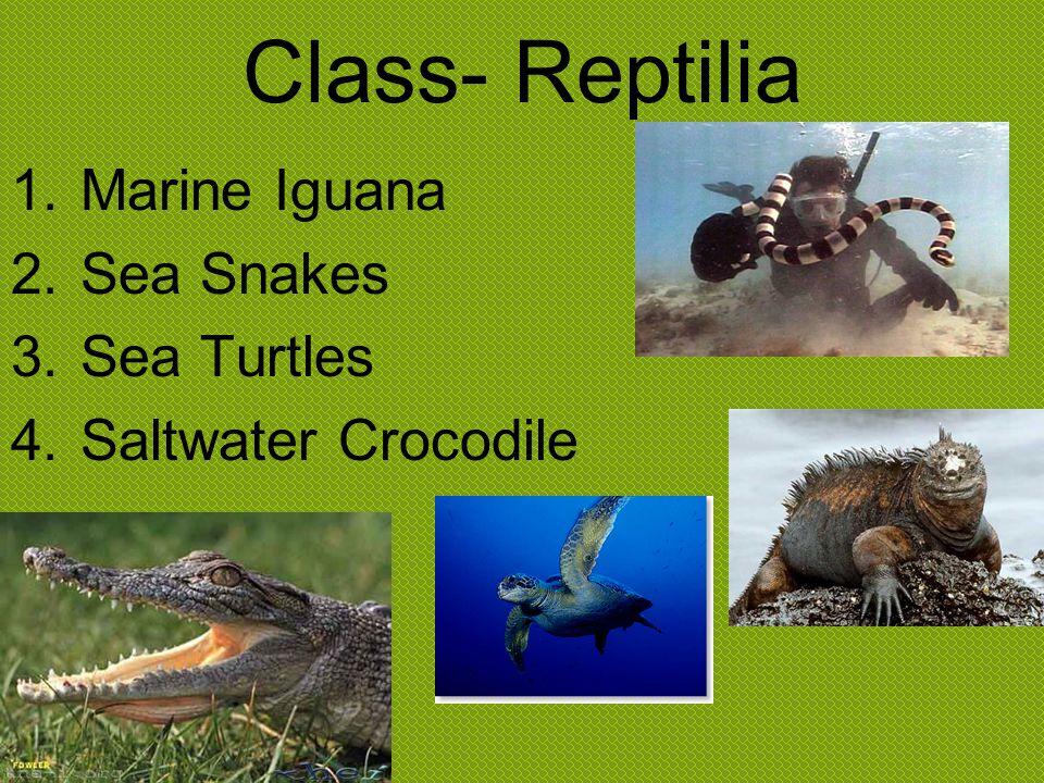 Reptile Info.From 180-90 million years ago, various reptiles were dominant marine predators.