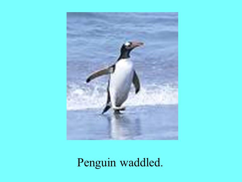Penguin waddled.