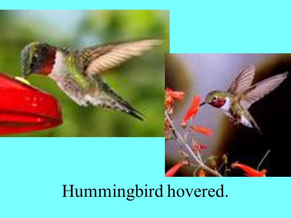 Hummingbird hovered.