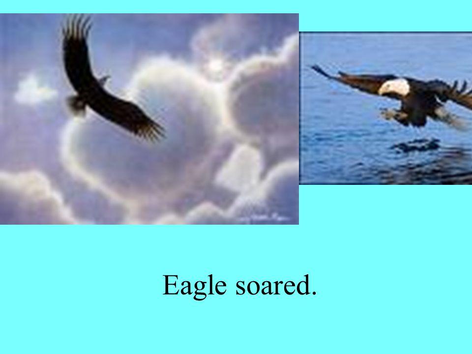 Eagle soared.