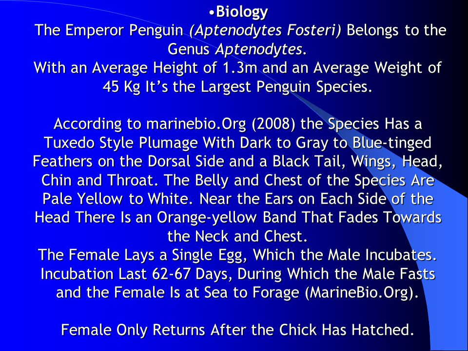Biology The Emperor Penguin (Aptenodytes Fosteri) Belongs to the Genus Aptenodytes.