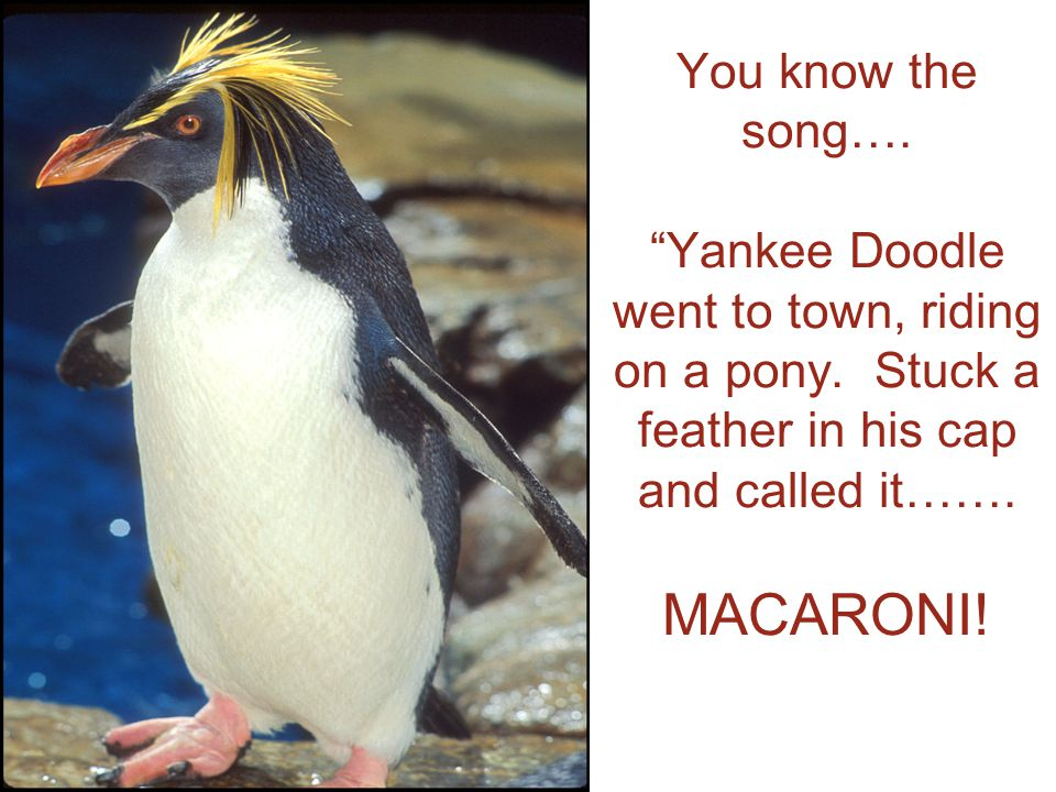 You know the song…. Yankee Doodle went to town, riding on a pony.